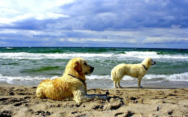 Hd Dogs Day Out Wallpaper Dogs Day Out Animals