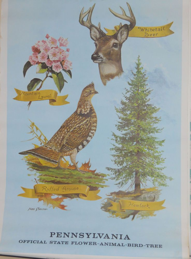 VINTAGE NED SMITH SIGNED PA OFFICIAL STATEBIRDFLOWER