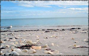 Beach Views Campvenice Retreat Venice Florida