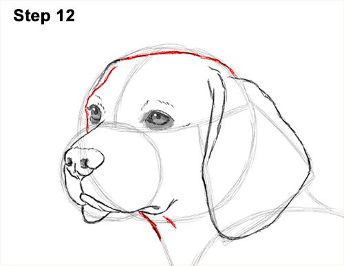 How To Draw A Beagle Video Step By Step Pictures Rajzok