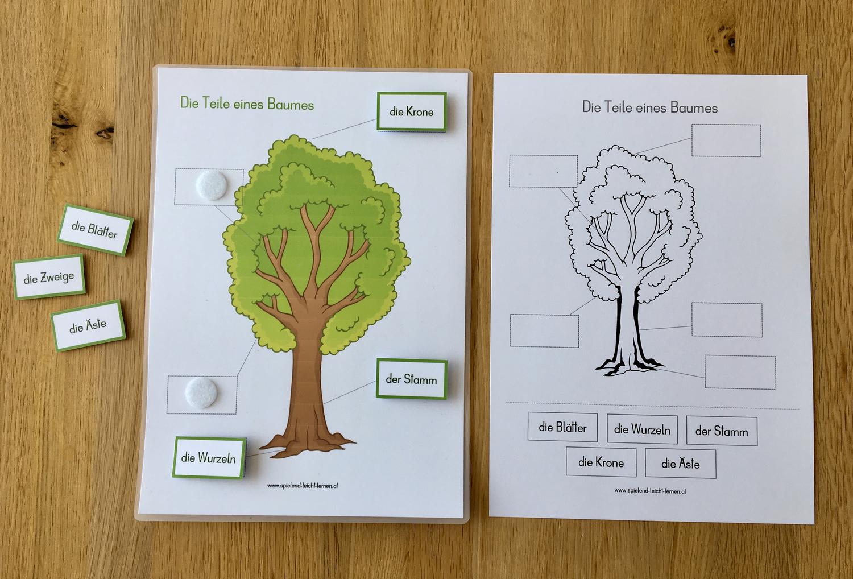 Die Teile eines Baumes – Unterrichtsmaterial im Fach ...