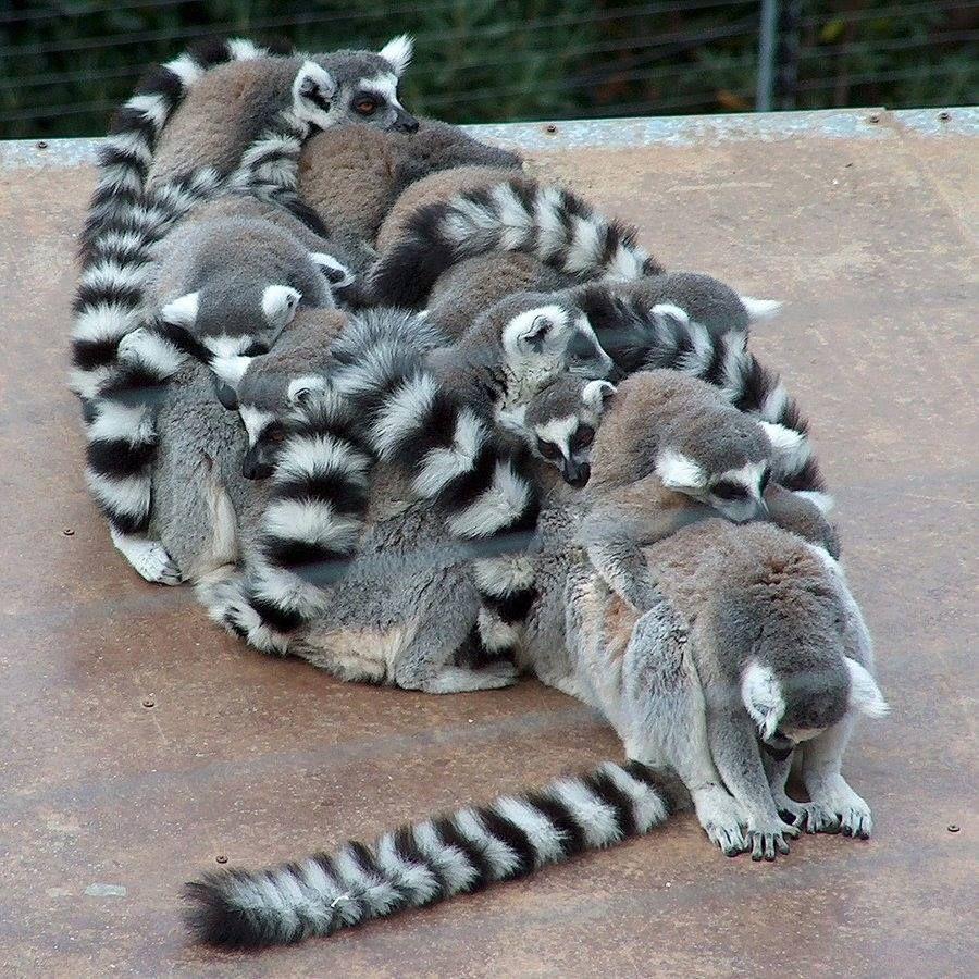 Lemars | Animals | Pinterest