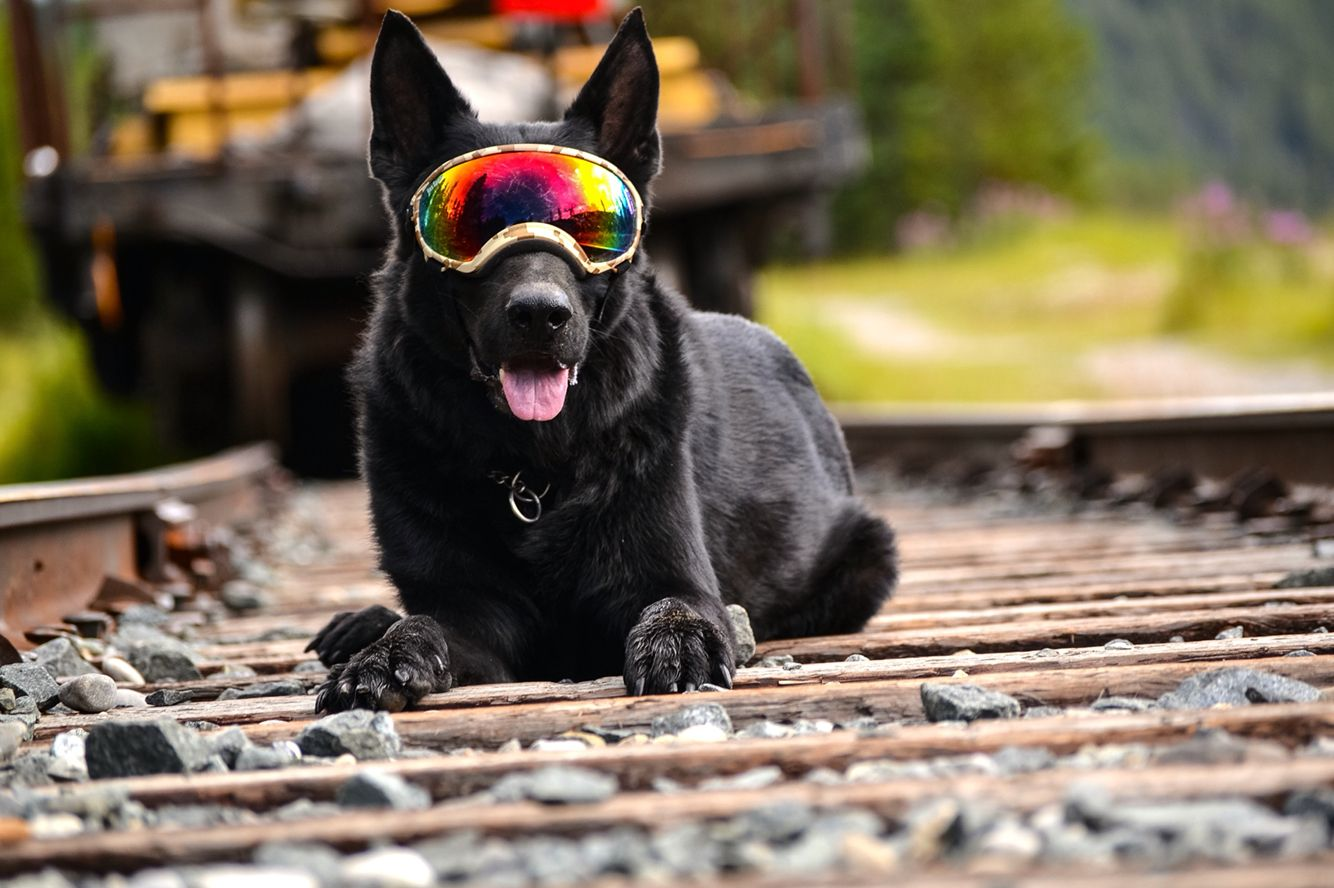 Black Dog Donned His Rex Specs In Lake Louise Alberta Black