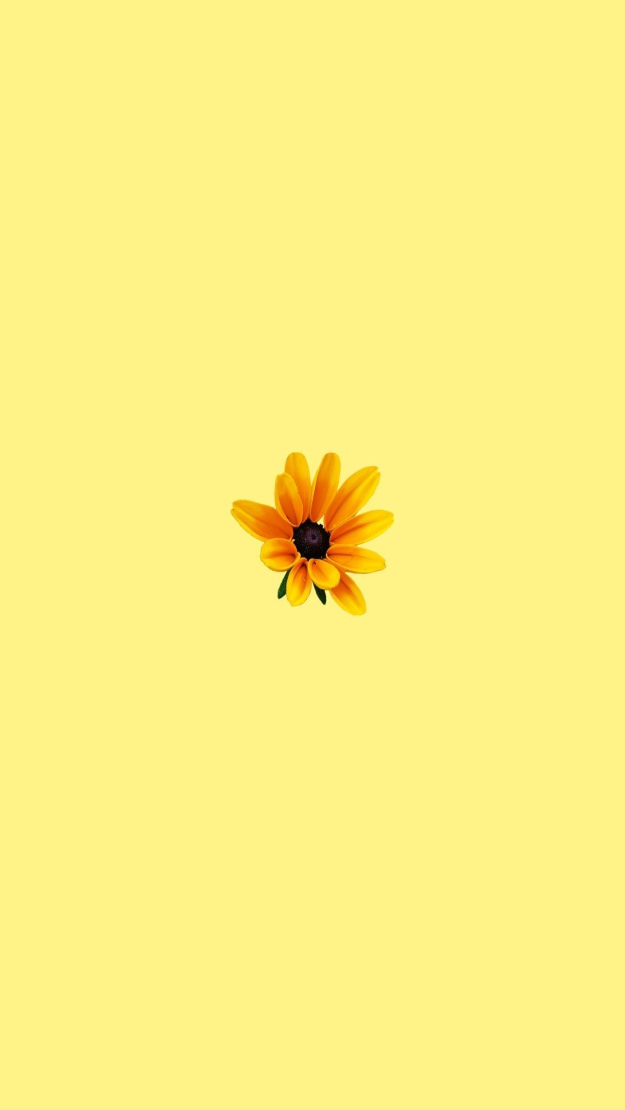Yellow Wallpaper Aesthetic In 2019 Iphone Wallpaper Wallpaper Cute Pastel Wall Yellow Aesthetic Pastel Iphone Wallpaper Yellow Sunflower Wallpaper