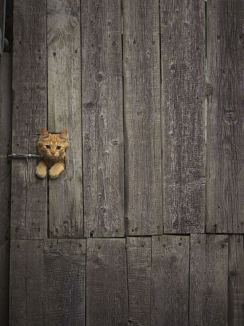 Kitty Knob