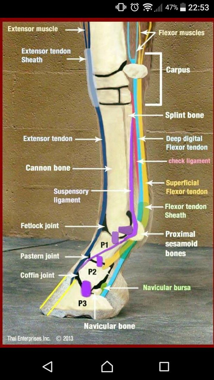 Pin By Sophie K On Helpful Horse Hints Pinterest Horse And Horse