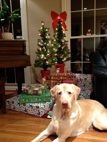 Linus From Alexandria Repin Repin Repin Christmas Animals Christmas Cats Christmas Dog