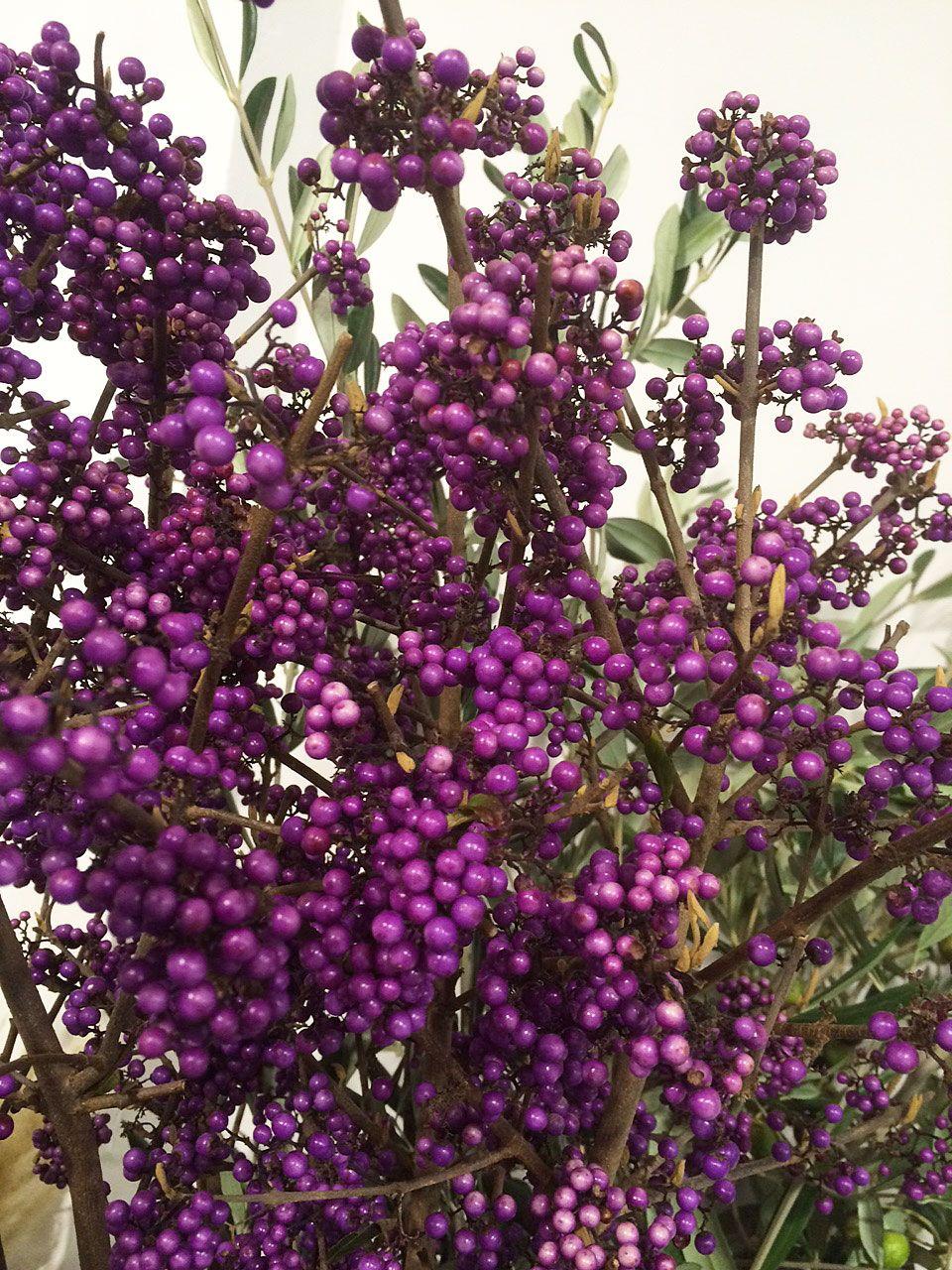 Liebesperlen - Callicarpa | Autumn decorations ...