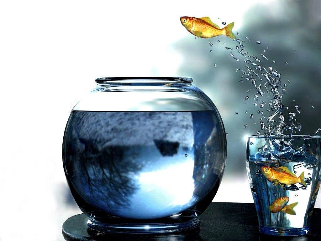 Digital Art Goldfish Glass Fishbowls Fish Jumping Water Drops Wallpapers Hd Desktop And Mobile Backgrounds Glass Fish Bowl Fish Jumps Fish Bowl