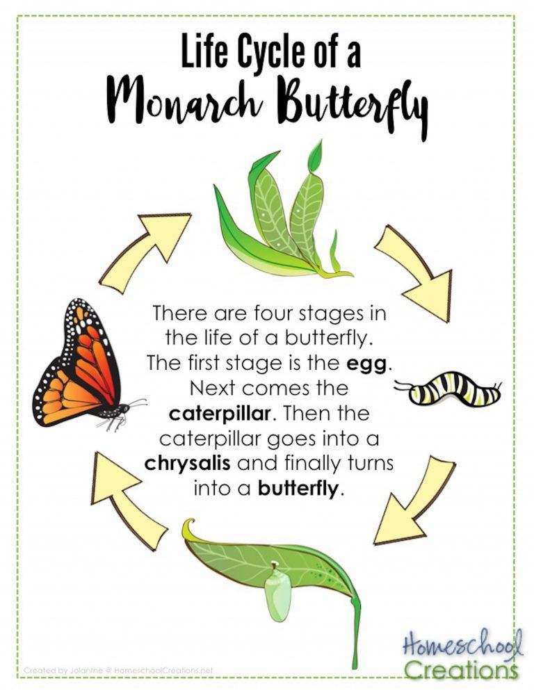 Youtube Jack Hartmann Butterfly Science Butterfly Life Cycle 9