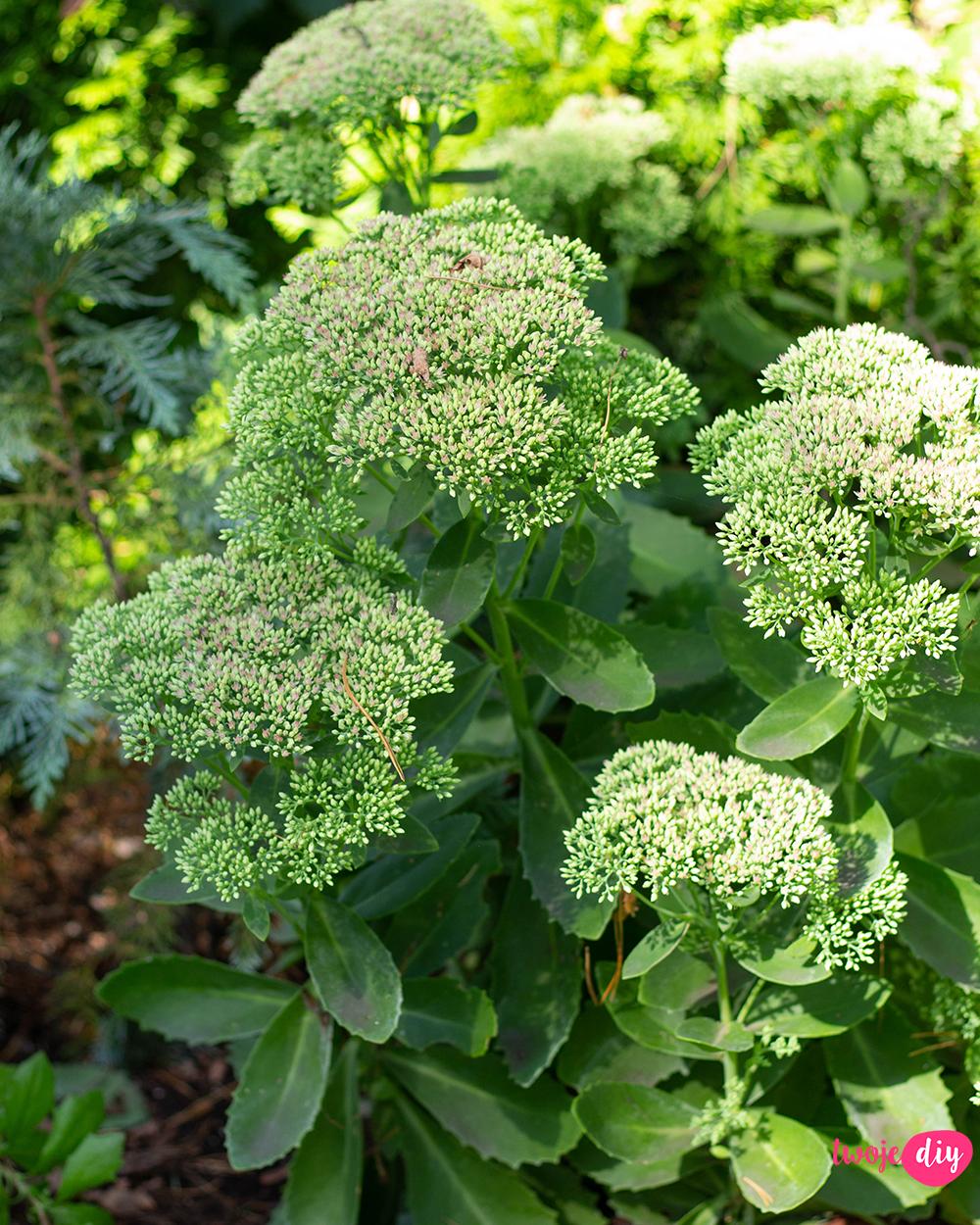 19 Roslin Ktore Beda Rosly W Zacienionych Miejscach Twoje Diy In 2020 Shade Garden Plants Backyard Garden