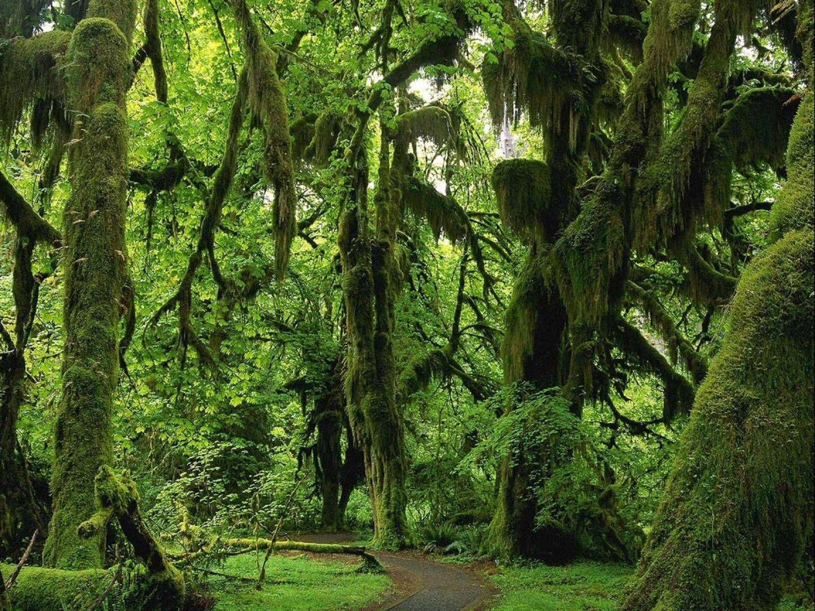 Imgur Com Beautiful Tree Beautiful Forest Forest Wallpaper