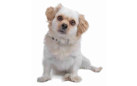 Dog Breed Selector Dogtime