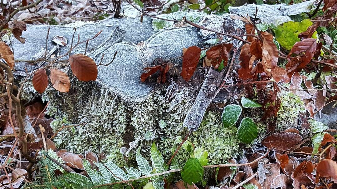 So kalt war es bislang noch nicht #frost #baum #nature
