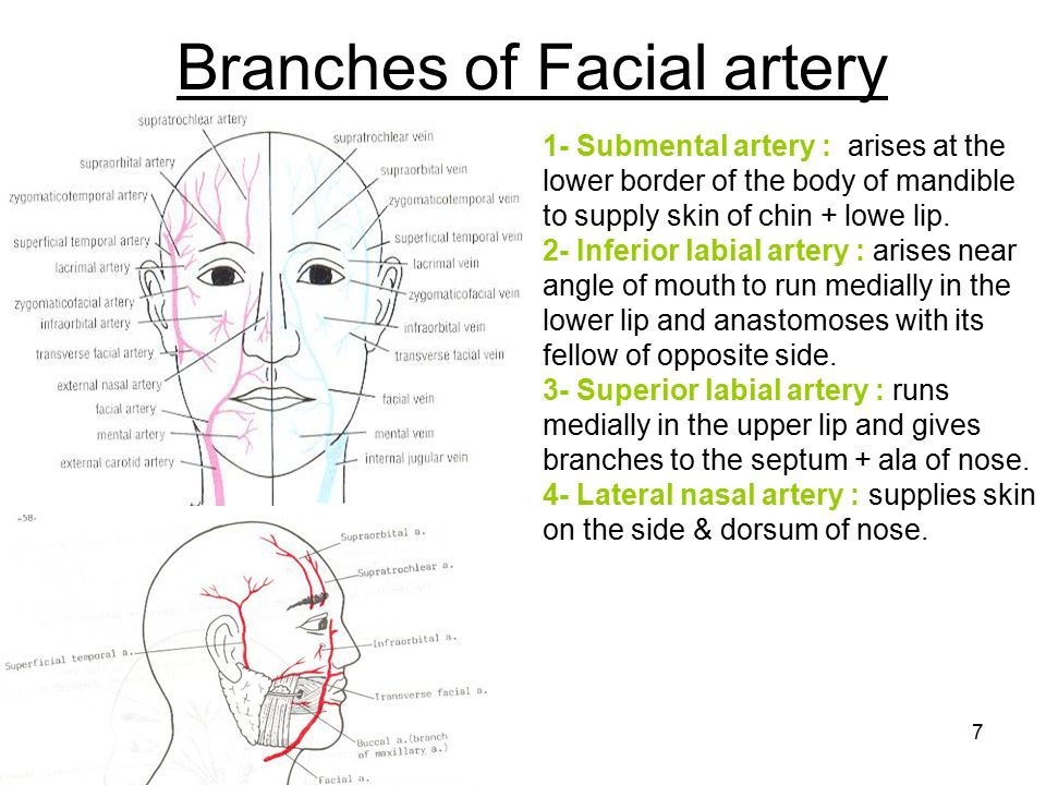 Image result for lip anatomy | Лицо | Pinterest | Anatomy and Lips