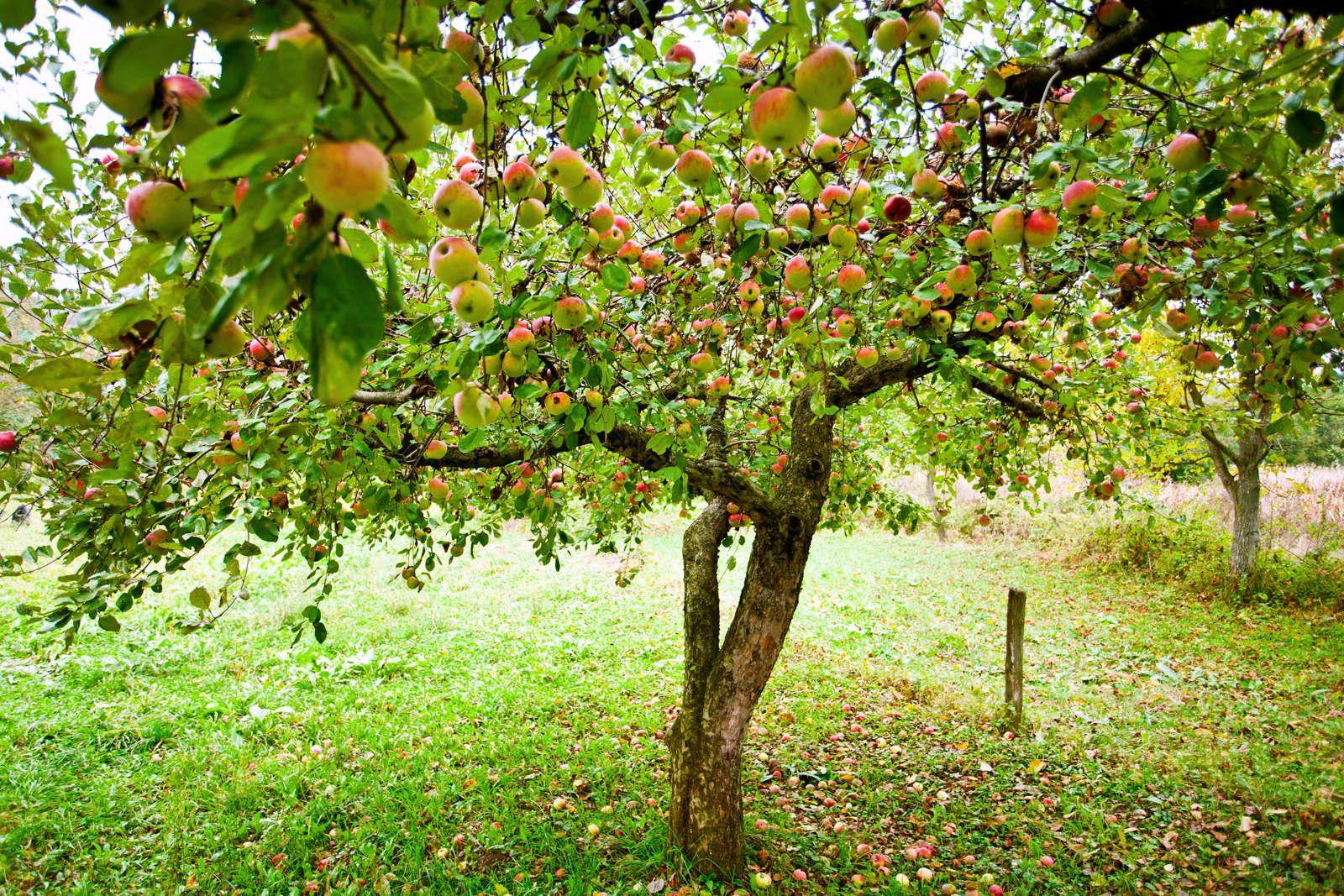 Obstbäume Wann Pflanzen