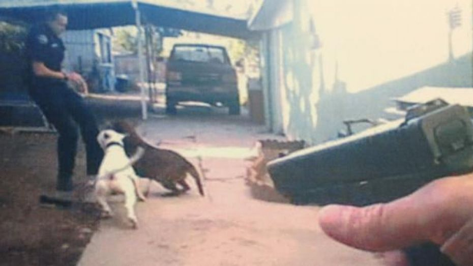 Aninimal Book: Dog Shot And Killed By Officer After Attacking His Partner ...