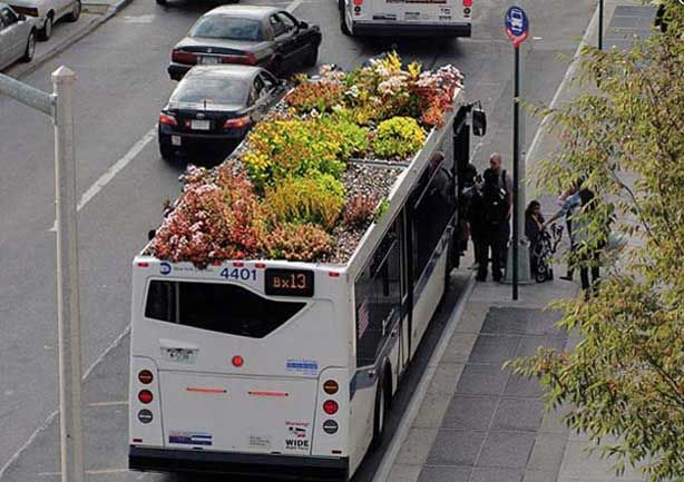 Gardens Thrive on Top of City Busses    Bus Roots is a living garden planted on the roofs of city buses. It's an effort that rose out of New York City designer Marco Antonio Castro Cosio's graduate thesis at the NYU.