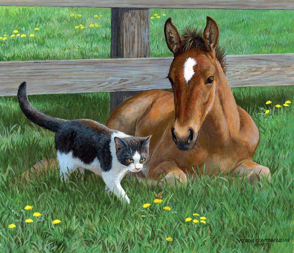 картинки коровы льва кошки собаки лошади продаже товары раздела