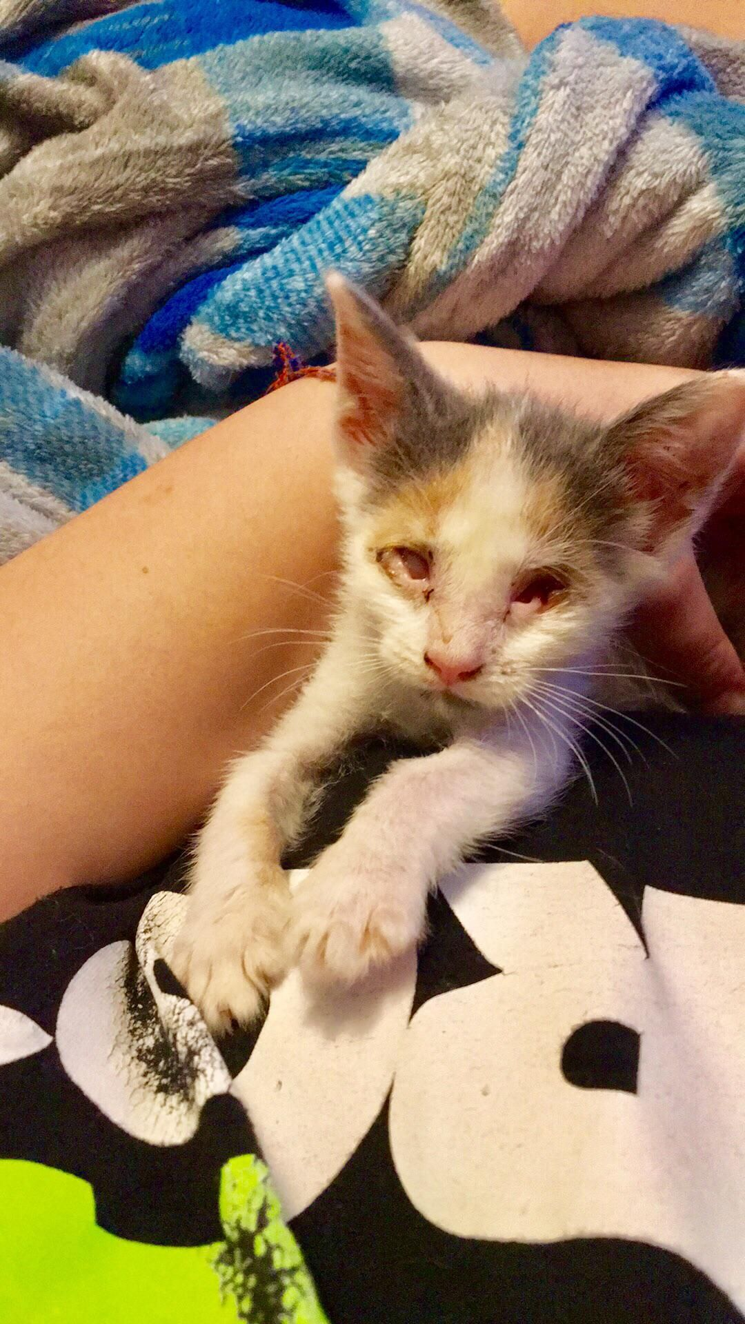 I M Fostering A Little Girl Who S Eyes Never Fully Developed But She Acts Just Like Any Other Crazy Kitten Cute Animals Kittens
