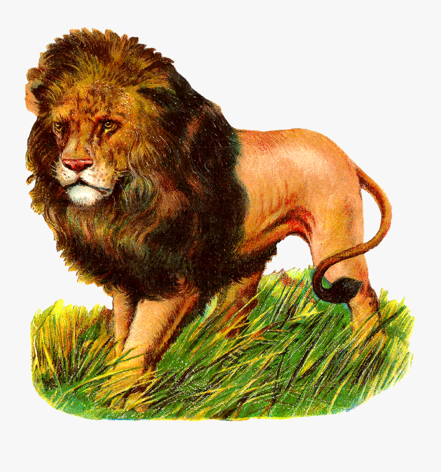Lions Clipart Zoo Animal Lion Vintage Animal Transparent