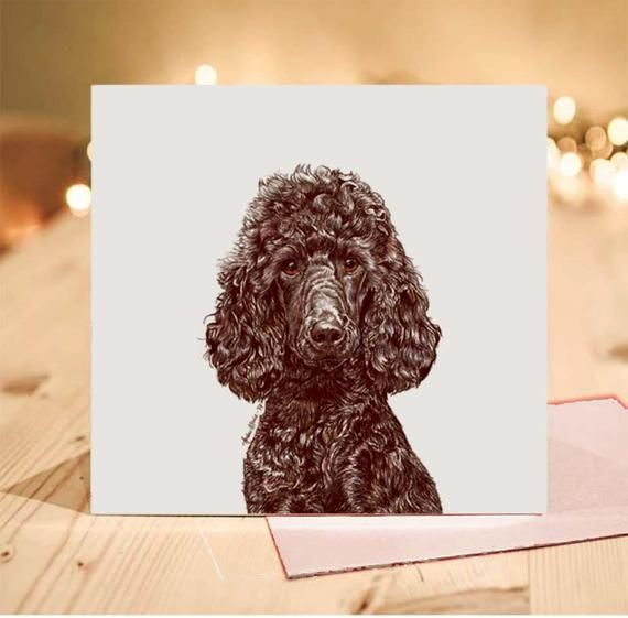 Poodle Greeting Card Black Miniature Tilly Blank Inside