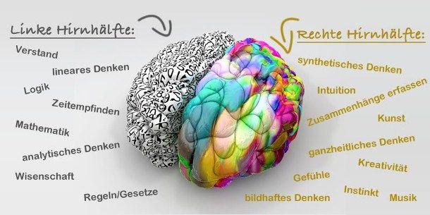 Pin auf Gehirn