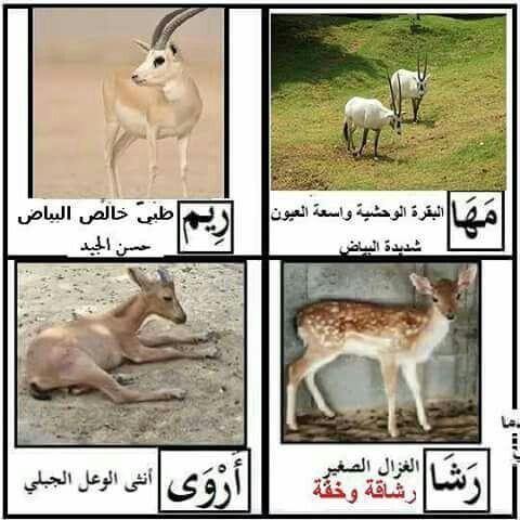 Pin On Arabic Language اللغة العربية