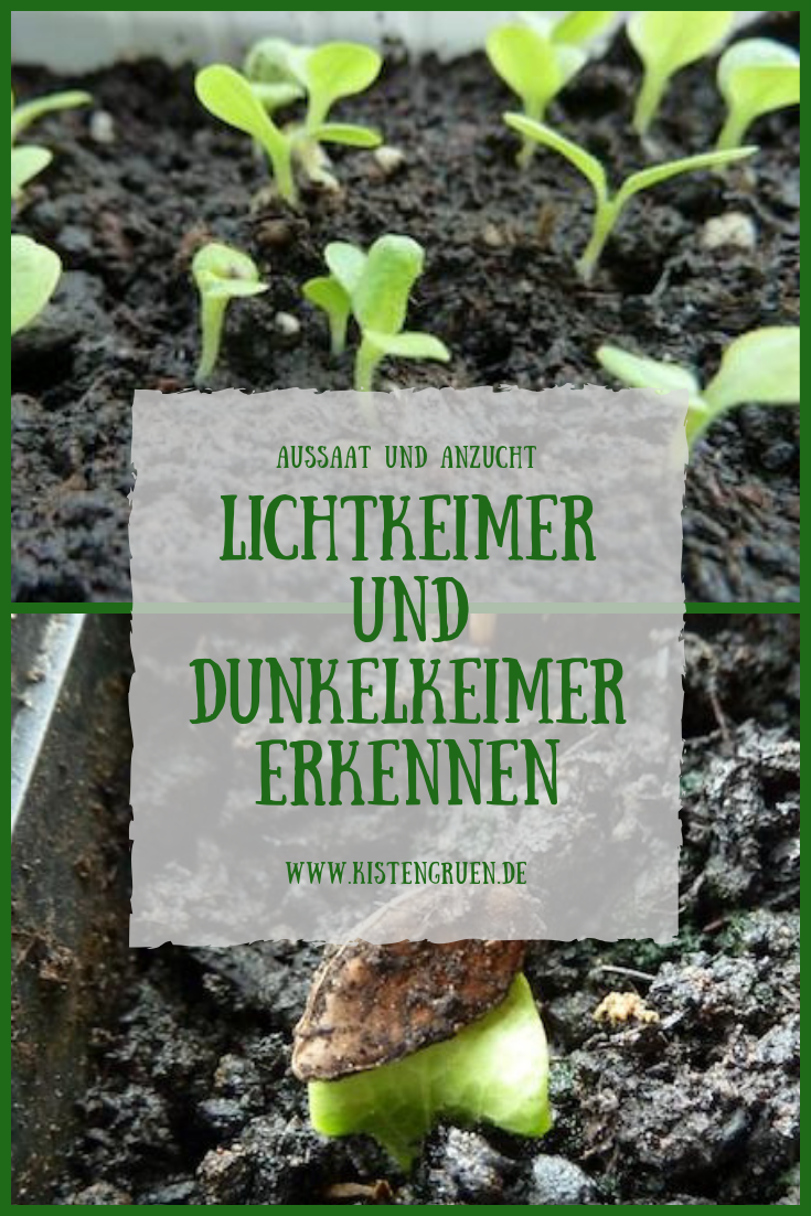 Lichtkeimer Und Dunkelkeimer Was Ist Da Der Unterschied Kistengrun Garten Pflanzen Pflanzen Garten