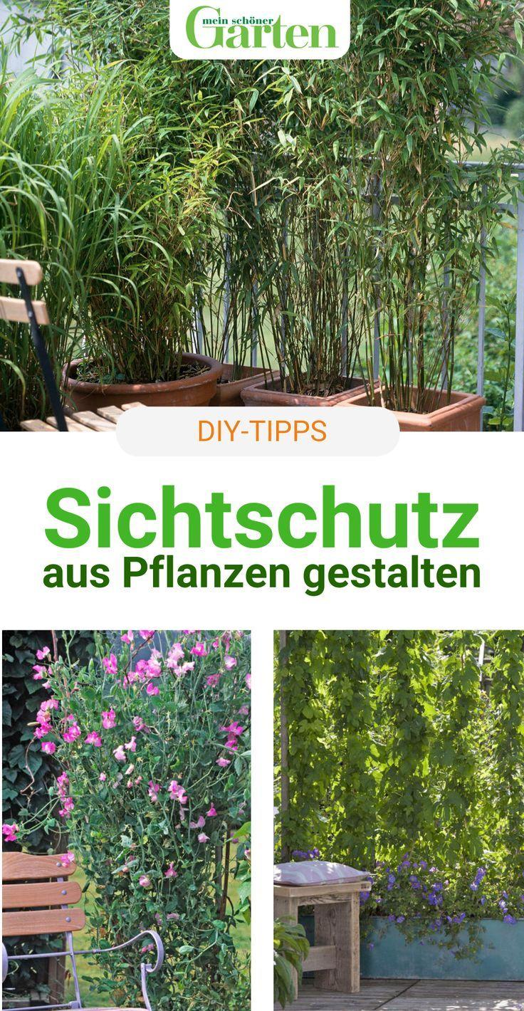 Sichtschutz mit Pflanzen: Die Möglichkeiten im Überblick