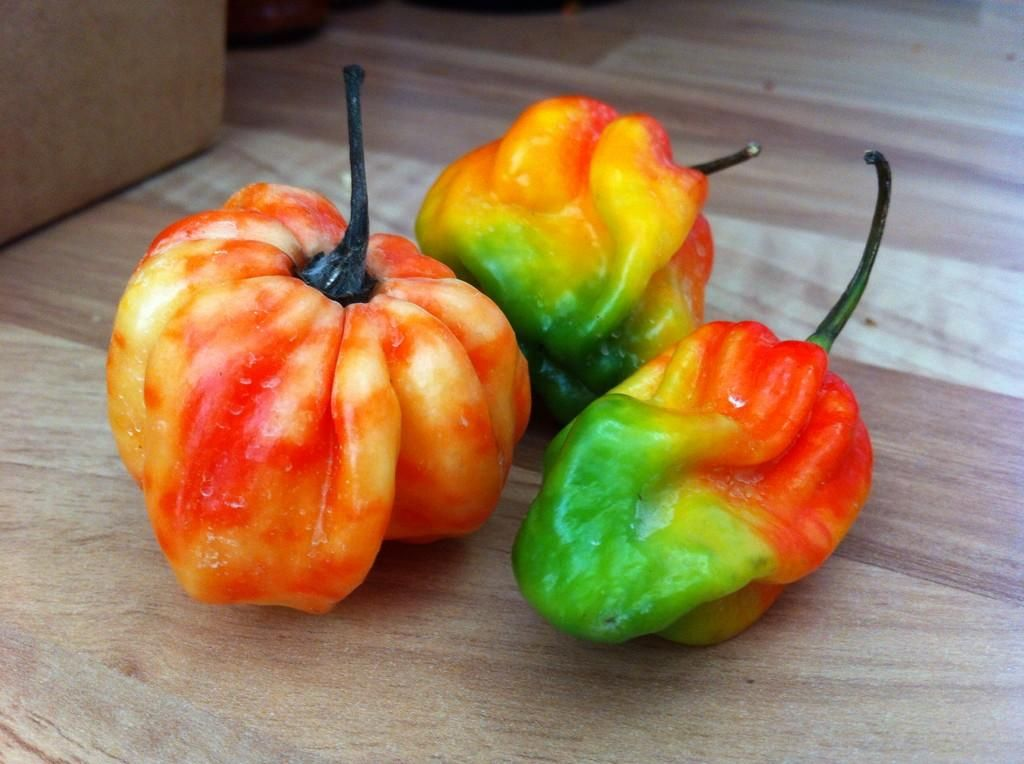 Pin on superhot peppers