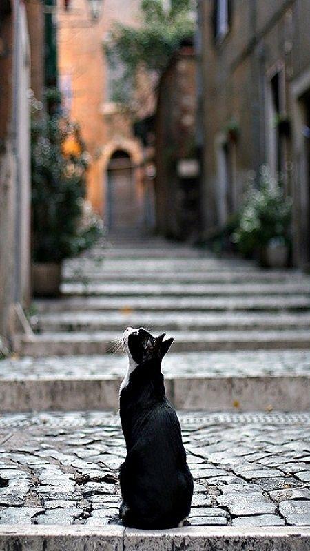Nothing like a beautiful black and white tuxedo cat.