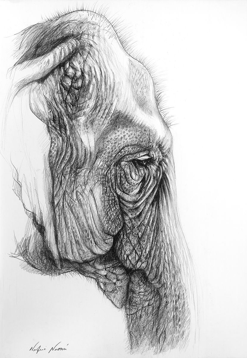100% of the profits from the sale of this artworks go to conservation initiatives around the world. www.animalworks.com.au Contact animalworksaustralia@gmail.com to purchase. #elephant #art #drawing #elephantdrawing #elephantart