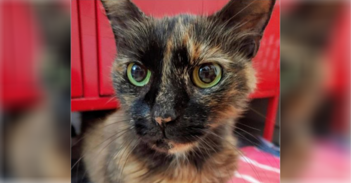 Standoffish Rescue Cat Comes Out Of Her Shell After Being Adopted By Forever Family In 2021 Crazy Cat People Cat Rescue Animal Rescue Site