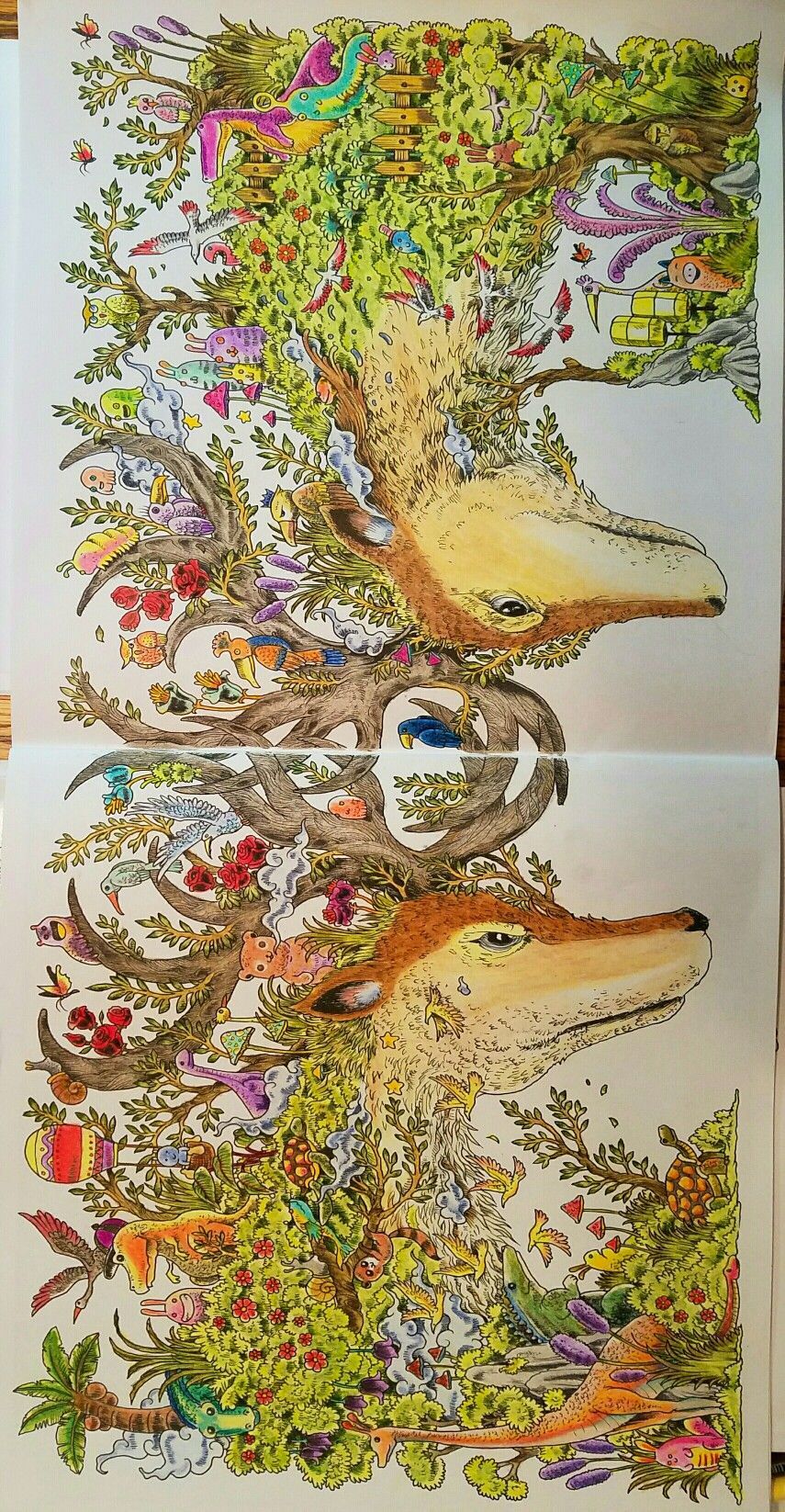 ANIMORPHIA Coloring Book By Kerby Rosanescolored Ellenetta