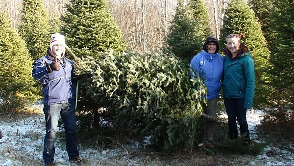 Find Real Minnesota Grown Christmas Trees From Butkiewicz Family Farm In Kettle River Minnesota In Our Free Online Directory Family Farm Kettle River Farm