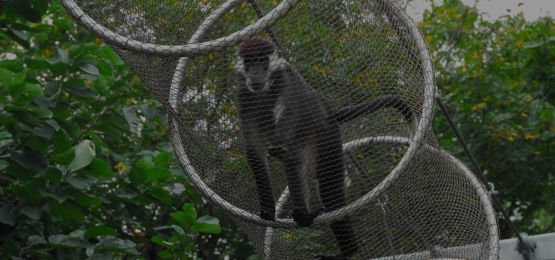 There is a monkey in rope mesh passageway.   zoo mesh   Pinterest ...