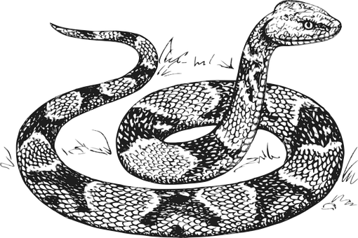 Animal Vector Graphics Pixabay Download Free Images Snake Coloring Pages Snake Drawing Snake Sketch