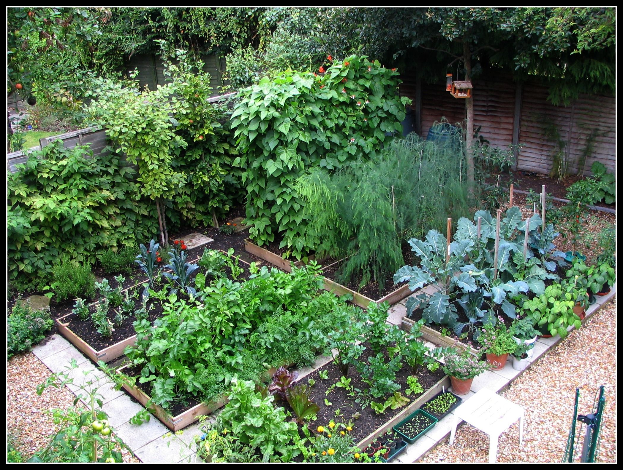 mark s veg plot a really neat tidy and productive example of a kitchen garden hoping for on kitchen garden id=35517