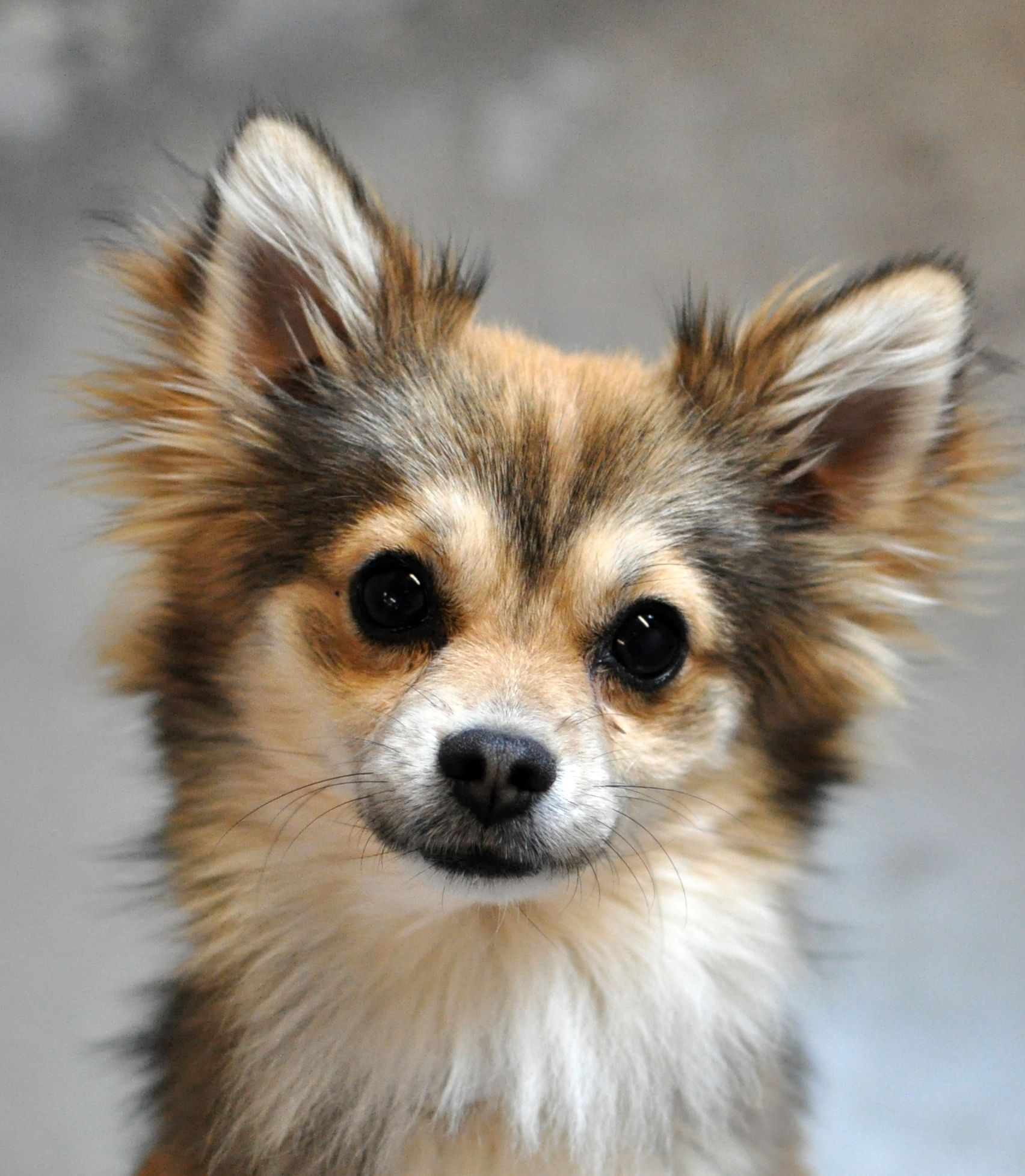 This little guy is at the Sacramento SPCA... what a face!