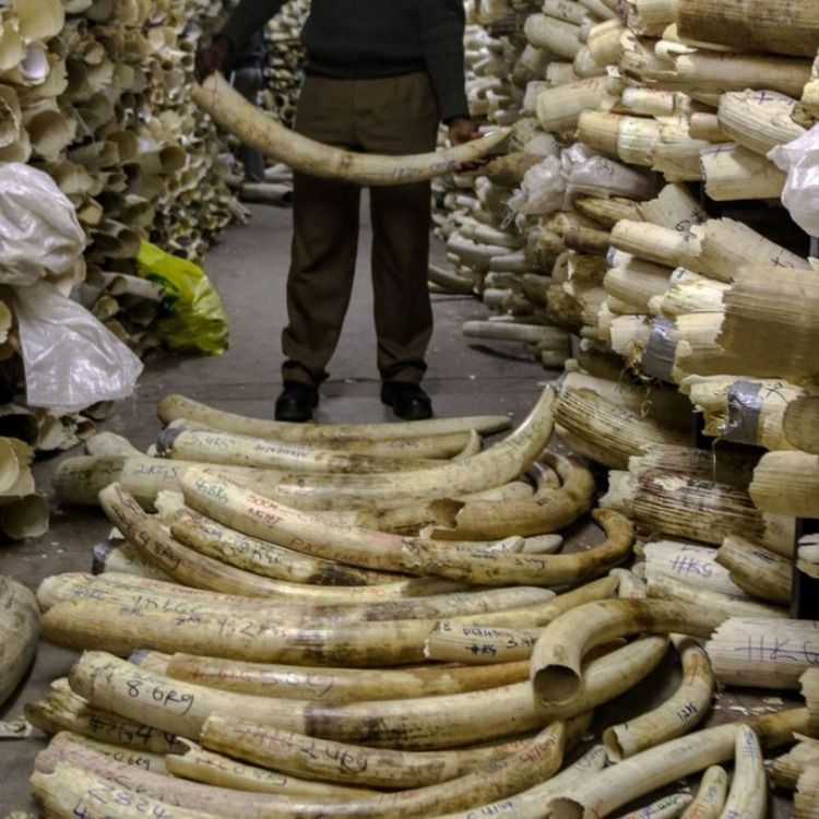Elephant tusk and ancient African cultural antiques with