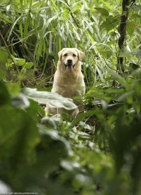 The Dog That Played Vincent In Lost Lost Tv Show Watch Lost Lost