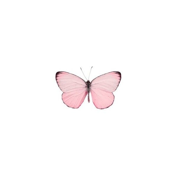 Tumblr Transparent Pinterest Liked On Polyvore Featuring Fillers Animals Backgrounds Pink Butterfly Wallpaper Iphone Background Wallpaper Pink Butterfly