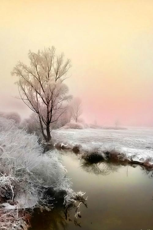 tulipnight:  Dark Water by Jean-Michel Priaux on Flickr.