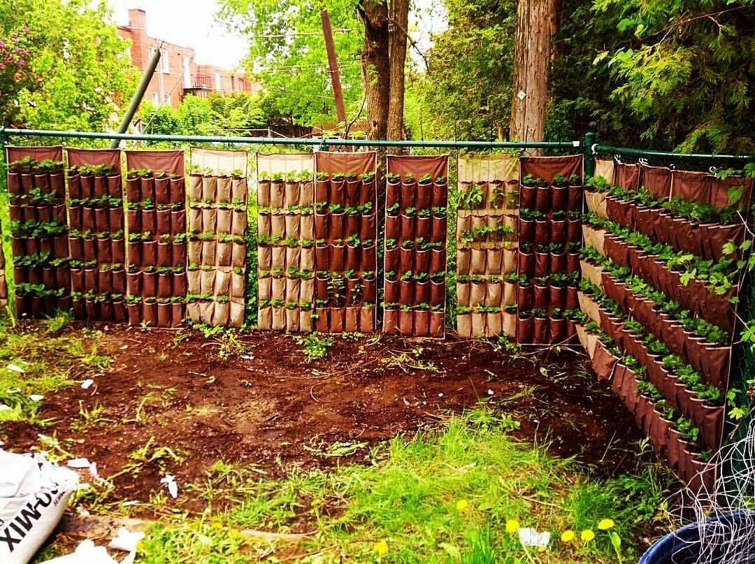 280 strawberry plants in this vertical set up in @theplantcharmer\'s ...