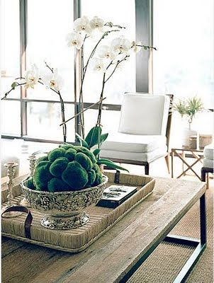 Orchids And Coffee Table Accessories