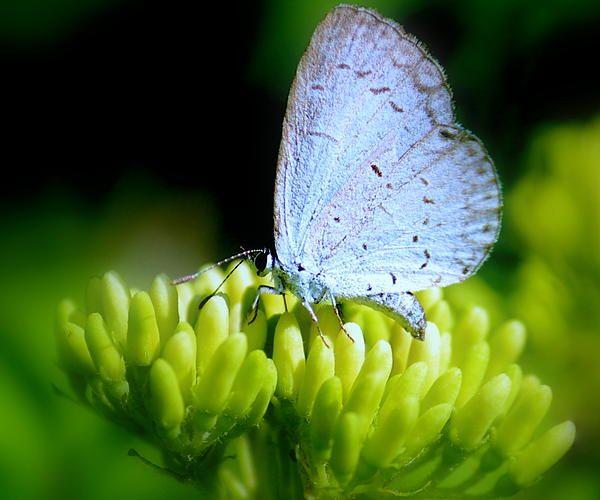 Little Blue Butterfly by Rosanne Jordan | Blue butterfly ...