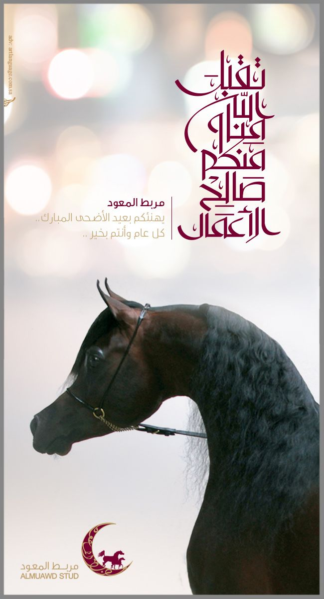Almuawd Stud Arabians Arabian Horse Horses