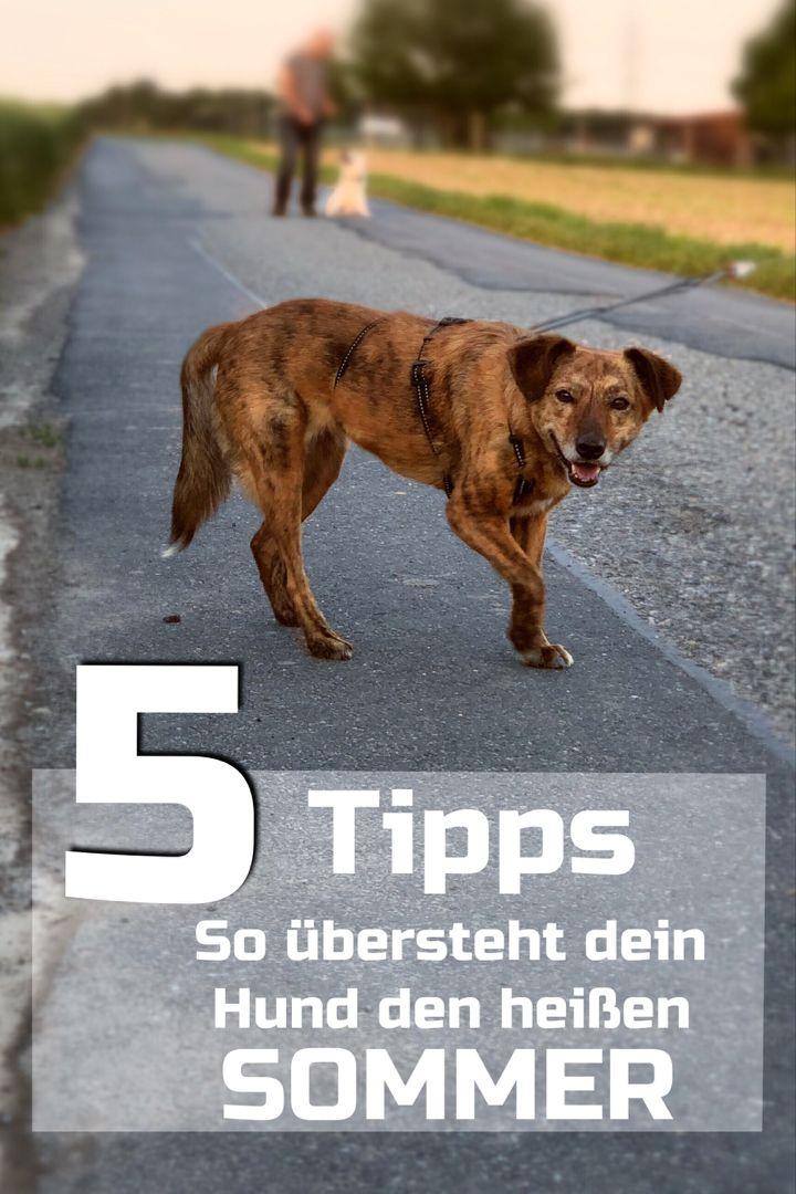 Pin Von Christel Stein Auf Hunde Gesunde Hunde Hitzschlag Hunde