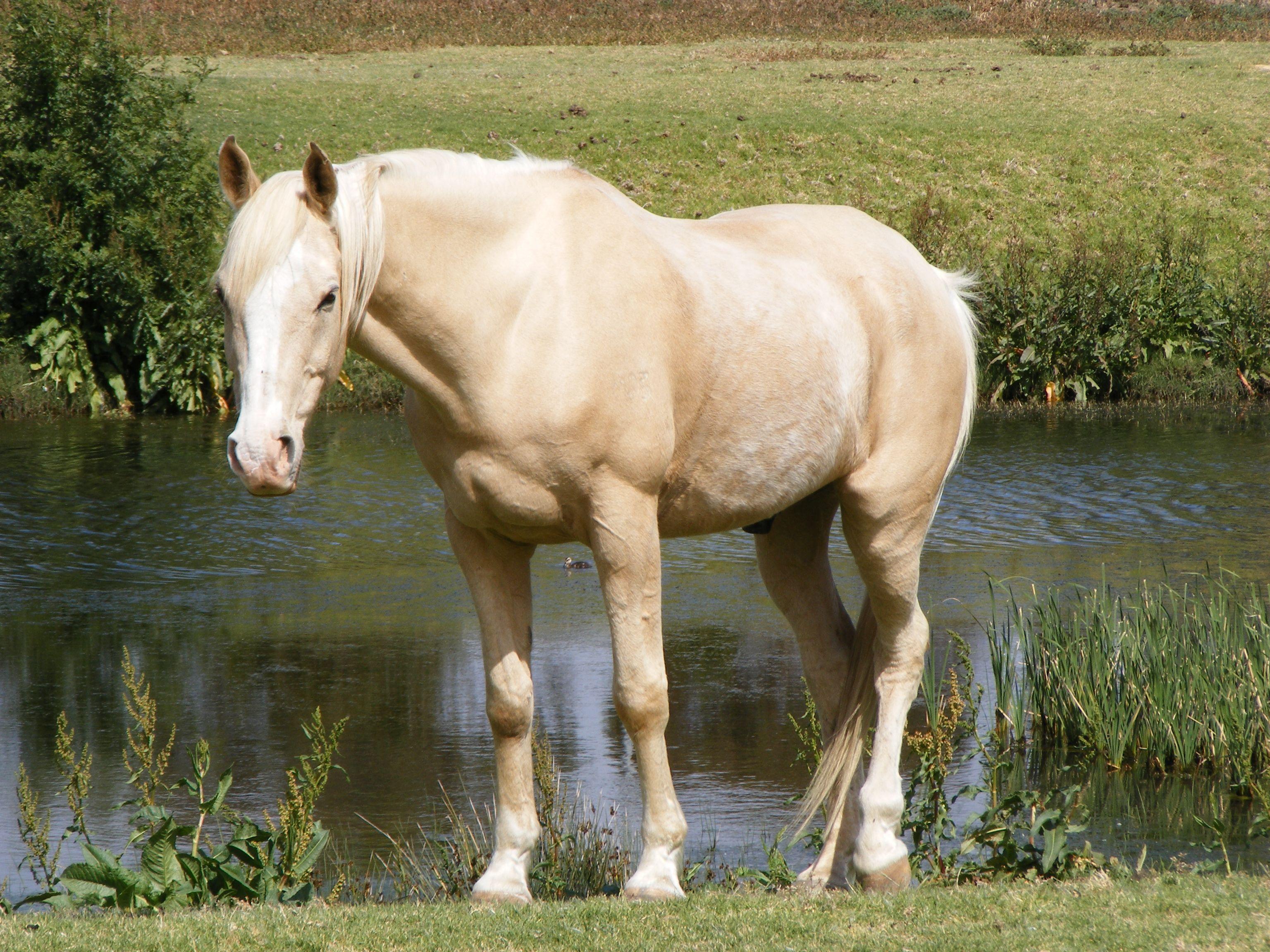 фото бежевых коней выбрать эскиз